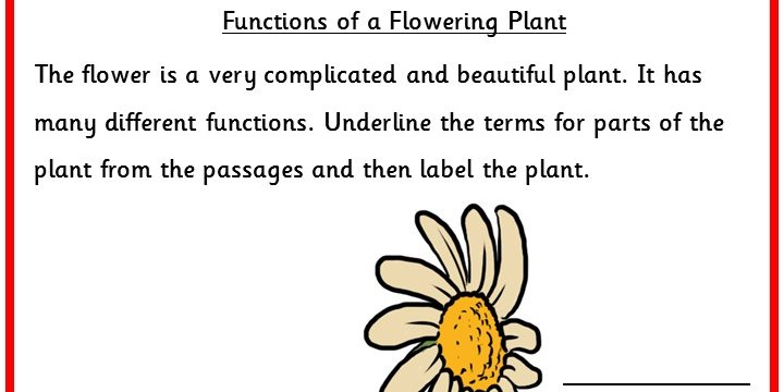 Functions Of A Flowering Plant Classroom Secrets