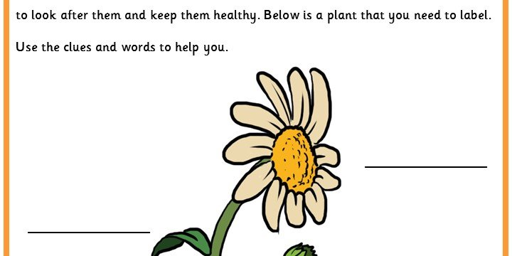 Identification of a Plant Structure – Plant Structure Worksheet